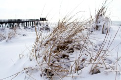 Snow Dunes IV: The Dune Grass Emerges