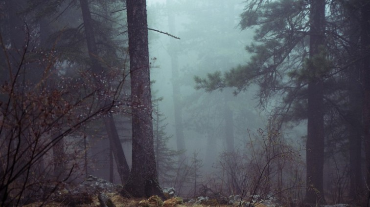 forest_trees_mystic_misty_atmospheric_scary_dark_conifer-719312